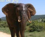 author healer coach tinacornish.co.za / From my books and websites.  tinacornish.co.za;  beaware.tinacornish.co.za;  soultour.tinacornish.co.za