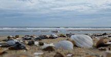 Seashells On The Beach / Seashells on the beach in Ocean City MD USA...  #oceancitycool #seashells