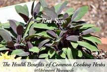 Herb Gardens / Herbs are so useful in wellness or cooking but did you know they are awesome in gardens as well? Grow your own herbs with these great herb gardening ideas!   Post up to 5 pins per day. To join this board follow www.pinterest.com/UntrainedHW and then leave a message on the Group Boards Board http://www.pinterest.com/untrainedhw/group-boards-for-untrained-housewife/ to receive an invitation.  / by Untrained Housewife