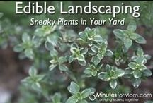 Backyard Farming / Everything about homesteading and small-scale self-sufficiency. To join this group board follow http://pinterest.com/UntrainedHW and leave a comment on the appropriate pin on the group board http://www.pinterest.com/untrainedhw/group-boards-for-untrained-housewife/