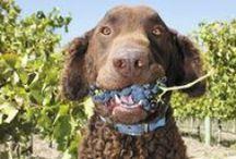 Wine & Dogs
