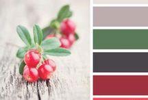 Colors_Design Seeds