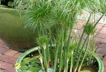 jardin, mobilier extérieur. / by finette