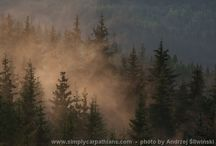Magic forest / Beauty of forests in Poland and Slovakia.