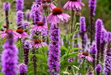Plant- Combinations