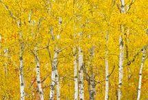 shades of yellow / All shades of sunshine