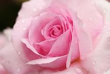 Pink Roses for Me / by Marie Caudill