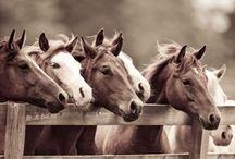 Horses / by C Scarzella