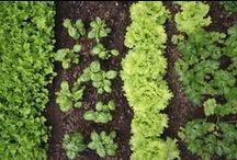 Gardening & Growing / by Gerard McLachlan