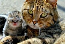 Exclusively Cats and kittens.... / You name it and you will find it here.... / by Elaine Dreger