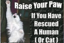 For Kitty - Adopt a Cat