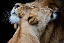 nella savana africana. ..