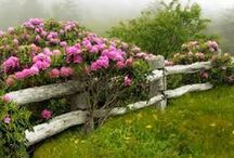 il giardino segreto...