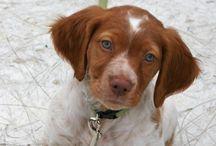 Pups I want  / Future dogs