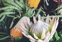 Planta, blomma eller växt