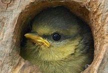 Oiseaux et leurs maison