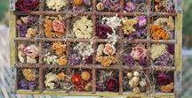 Pot pourri et fleurs séhées