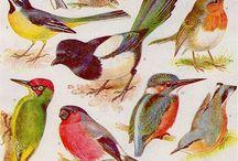 Bird prints Inspiration