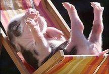 Cute animals / animals / by Beebe Anderson Nadolskey