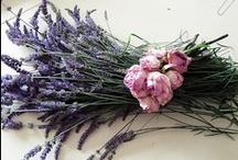 levendula -  lavender / by Andrea Andrea