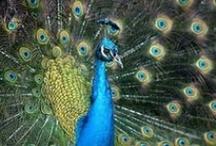 Boho Birds / Birds that I love - peacocks, parrots and flamingos!