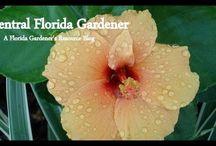 FL: Blogs & Websites