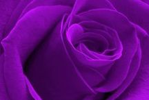 ❤Purple For Me