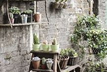 Little Garden / Gardening tips, ideas and beautiful garden decor.