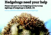 Hedgehogs / Hedgehogs need our help - ideas to raise their profile!