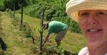 Fab Fun Findings in France @PumpjackPiddlewick / Our Pumpjack & Piddlewick Blog offers an insight into France, the French and simply life. Come, join in the fun, including making wine, gardening, cooking, downsizing and animal antics.