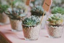 gardening ideas / com suculentas, as plantas mais lindas.