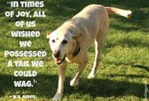 Dog Thoughts & Musings / Dog related Thoughts, sayings, lessons, memories.