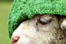 We love wool / All things natural, warm and wool