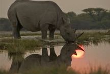 Rhino / Hippo Power / by Val