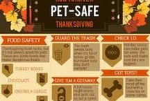 Holiday Safety for your Pets
