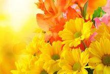 flores... frutos...