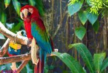 My Photos - Fauna and Flora / My photography of fauna and flora