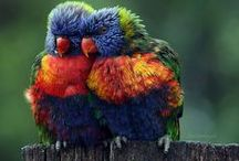 Birds Together / Birds are extremly emotional creatures. Let see it yourself.