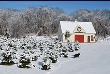 Christmas Tree Barn / This post and beam barn is 24 x 36 ft beauty, designed by Yankee Barn Homes for a Tiverton, RI Christmas tree farm.