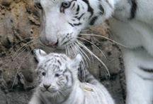 Beautiful wild animals! :)