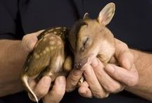 """Deer Family / Bambi was inspired, and said trembling, """"There is Another who is over us all. Everything belongs to Him, just as I do. But I, I love Him. I worship Him, I serve Him."""""""