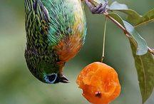 Se eu fosse um animal, seria um pássaro, passsarinho. / Figuras de aves que me transmitem paz e alegria.