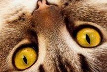 Gato é tudo de bom / Maravilhosas criações de Deus.