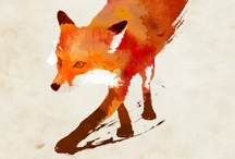 illustration stories-the fox