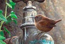 My favourite bird art