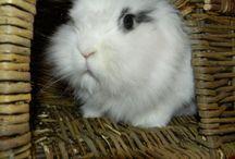 Cutesy wootsy / Animals big and small