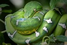 Suriname animals  / lots of wild life and pets