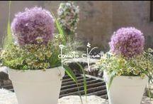 Scenografia di un fiorista:... / ...colori, cocci e mosaici per Torre Ruggeri a Otranto.