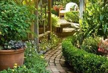 Gardening / Gardening ideas, projects, plants and paths