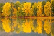 Montana / by Maureen Bray